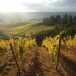 Dzień Chilijskiego Wina